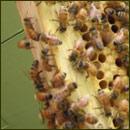 [jordan's bees]
